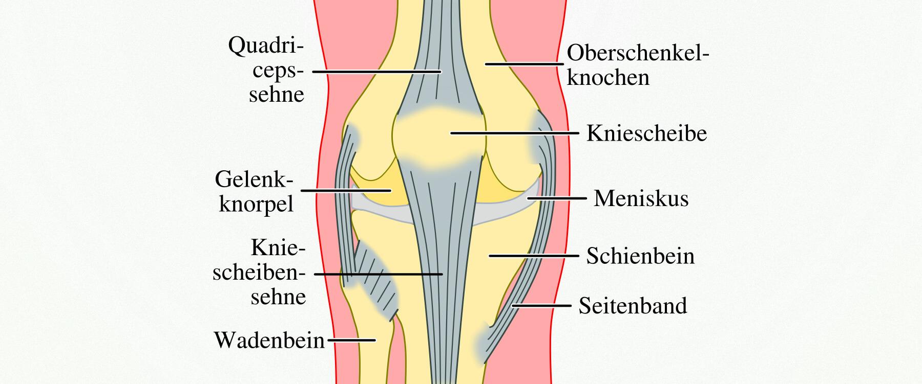 Charmant Sehnen In Knie Galerie - Anatomie Ideen - finotti.info